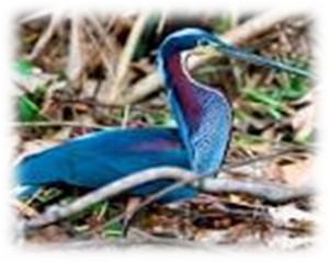 birdinghighlights_05