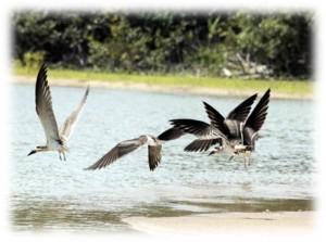 birdinghighlights_051