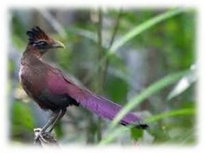 birdinghighlights_06