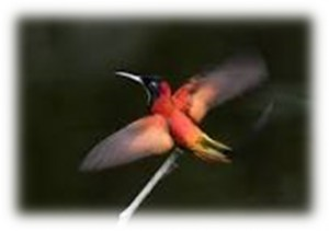 birdinghighlights_08